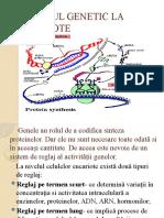 reglajul_genetic_la_eucariote.pptx