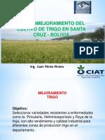 Tema N° 5A_Presentacion Proyecto Trigo_081019