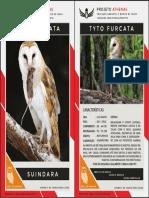 tyto_furcata_card