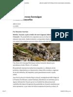 Ectatomma ruidum.pdf