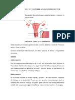 Organos genitales femeninos