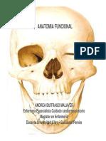 anatomia_clase_1