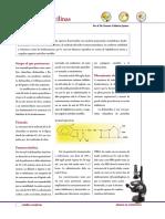 isoxazolil-penicilinas.pdf