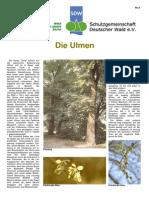 Die_Ulme.pdf