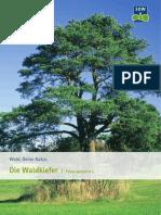 Die_Waldkiefer.pdf