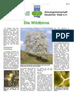 Die_Wildbirne.pdf