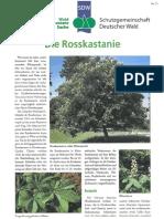 Die_Rosskastanie