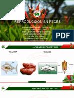 reproducción en peces