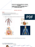 Sistema-Nervioso-para-Quinto-de-Primaria k