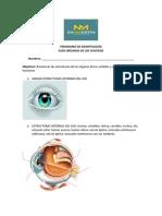 GUia O sentidos 2019-2.pdf