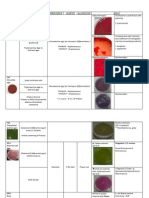 Bacterial Culture Media in Plate & Tube