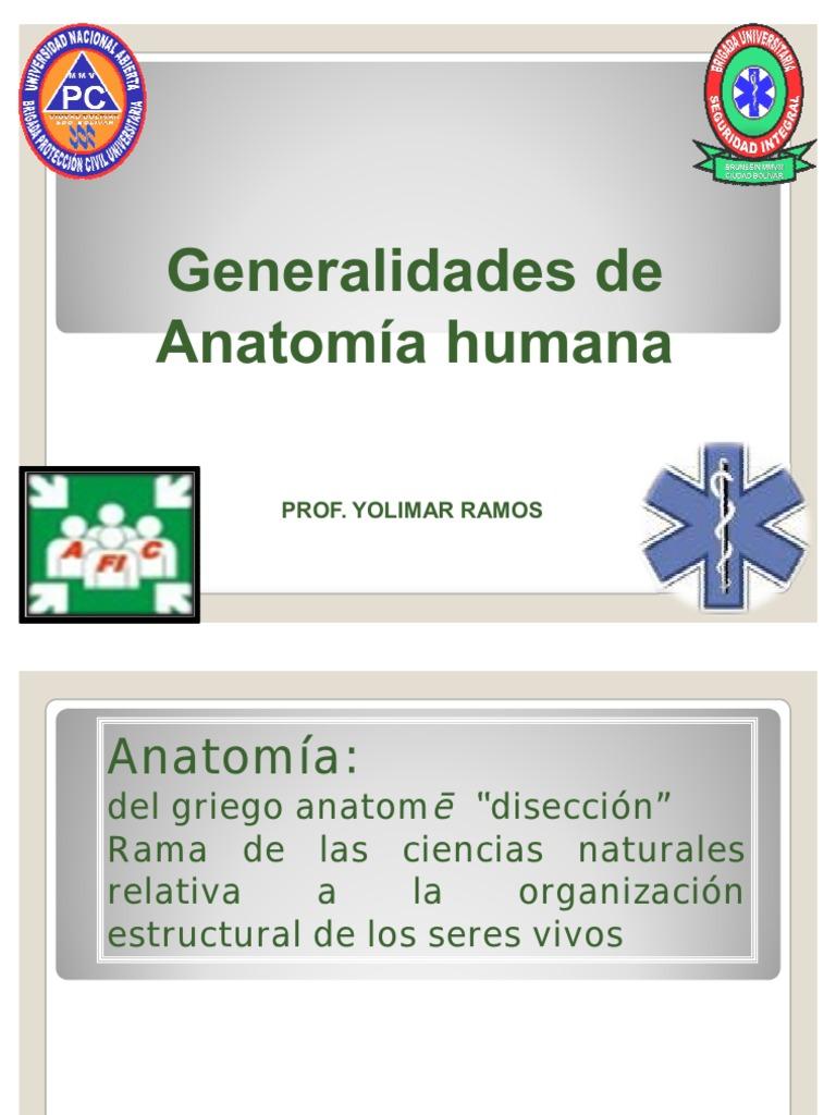 POSICION ANATOMICA HUMANA