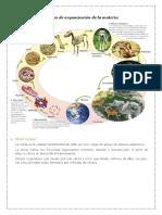 Niveles de organización de la materia Y ORGANOS Y FUNCIONES DEL CUERPO HUMANO