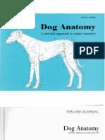 Dog.anatomy.goody 11
