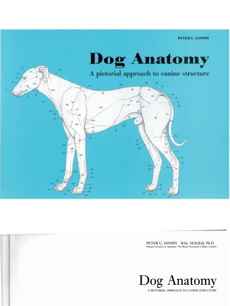 Dog.anatomy.goody 11 | Vertebra | Vertebral Column