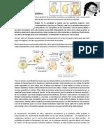 Teoría endosimbionte