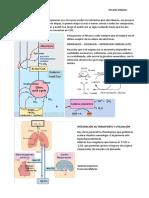 Resumen Bioquímica Clínica I