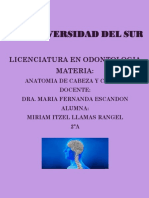 MUSCULO CABEZA Y CUELLO  (1)