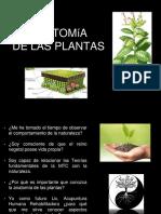 Anatomia de las plantas I (1)