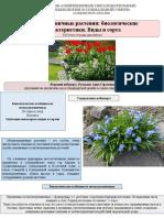 мелколуковичные растения