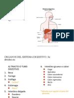 Sistema Digestivo(6°)