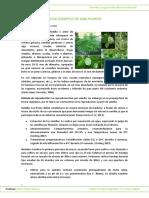 Ficha Ejemplo de Una Planta