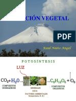 4. Nutrición Mineral