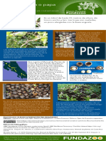 Infografía Palo de papa 2