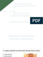 Anatomia de Genitales Femeninos