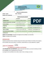 GUIÍA DE RETROALIMENTACIÓN 4º