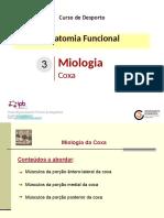 3.6-Miologia _coxa_