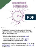 Chromosomes Fertilization