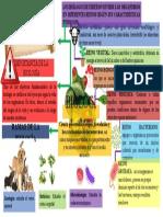 Mapa mental sobre la biologia