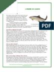 salmon_primer_bgnd