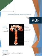 histologia ap.reproductor feenino final