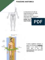 Anatomia-1-SFA-2020