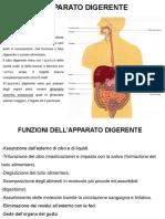 Anatomia 2 SFA 2020