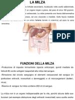 Anatomia-3-SFA-2020