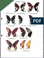 Fieldguide Kupu-kupu Jawa Barat