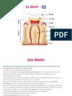 MLM - Franceza - La Dent