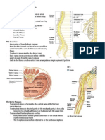 Peripheral Nervous System - Handouts