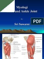 Myologi knee-ankle-1