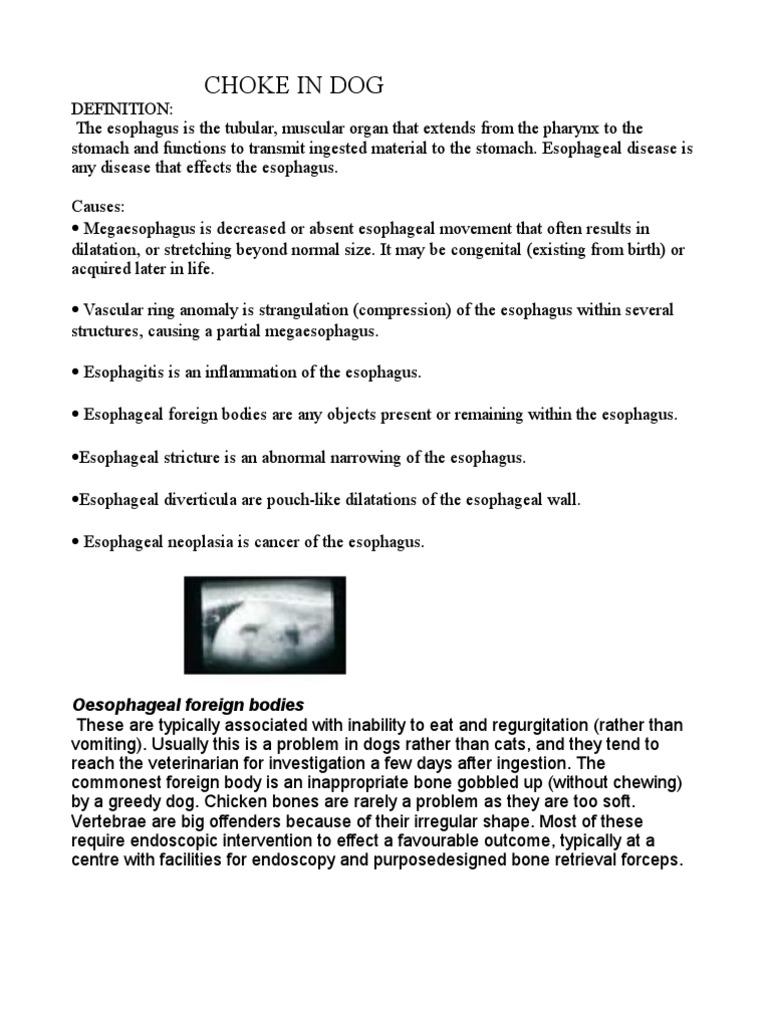 choke in dog | esophagus | gastrointestinal tract