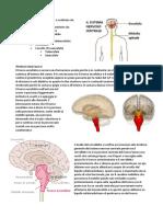 Il Sistema Nervoso Centrale è Costituito Da