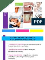 operatoria-periodoncia