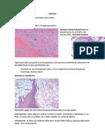Lesion Reversible e Irreversible Sandra Lopez Microscopía