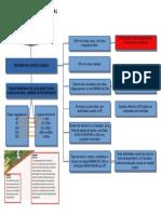 APP - Mapa Mental_organized