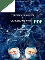 Female brain and male brain