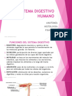 SISTEMA DIGESTIVO HUMANO-E