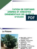 Cours Arboriculture Ornementale 2